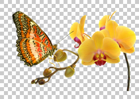 花卉剪贴画背景,刷脚蝴蝶,切花,飞蛾与蝴蝶,昆虫,帝王蝴蝶,传粉者图片