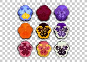 黑白花,中提琴,紫罗兰家族,植物,洋红色,白色,花瓣,紫色,黑白,绘图片