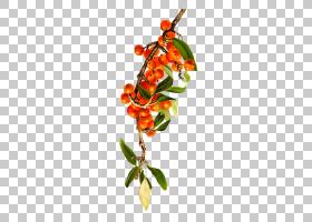 橙花,分支,花,想法,植物,古董,橙色,蓝莓,草莓,[医]山梨,水果,罗