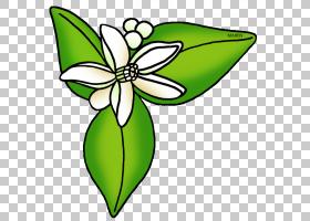 黑白花,绿色,传粉者,植物群,黑白,线路,昆虫,植物,蝴蝶,植物茎,叶图片