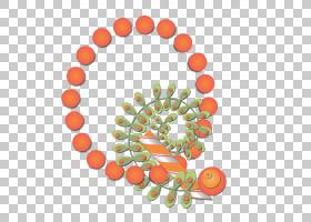 橙花,花瓣,花,食物,线路,水果,圆,橙色,圣帕特里克,钩针编织,四叶