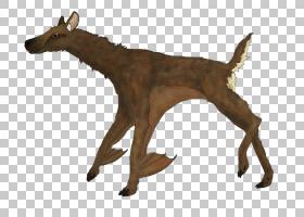蝙蝠卡通,动物形象,尾巴,鹿,野生动物,针鼠属,马蹄蝠,考拉,犀牛,图片