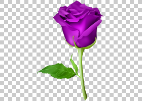 粉红色花卡通,芽,植物茎,洋红色,蔷薇,紫罗兰,花瓣,玫瑰秩序,切花图片