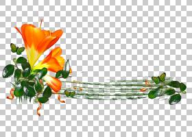 背景花框,花卉,花束,橙色,植物群,插花,花卉设计,植物,花瓣,创造