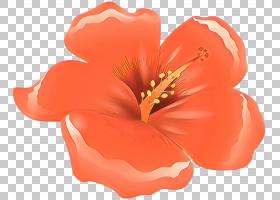花卉剪贴画背景,多年生植物,芙蓉,野花,草本植物,桃子,梅洛家族,图片