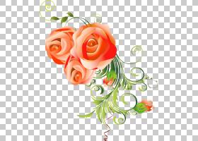 花卉剪贴画背景,桃子,植物,橙色,花卉,玫瑰秩序,玫瑰,植物群,插花图片