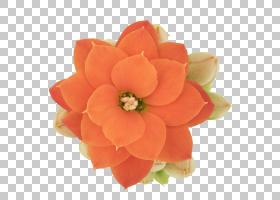 花卉剪贴画背景,桃子,橙色,花,切花,花瓣,(1)图片