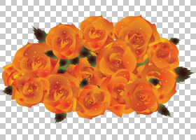 花卉剪贴画背景,水果,玫瑰,玫瑰家族,花瓶,花束,切花,玫瑰臀部,花图片