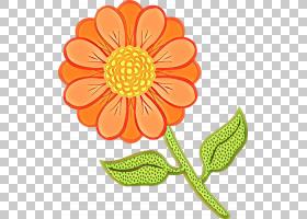花卉剪贴画背景,洋甘菊,切花,非洲菊,植物,英国万寿菊,橙色,黄色,图片
