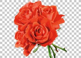 花卉剪贴画背景,红色,花卉,橙色,切花,floribunda,插花,花卉设计,图片