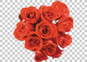 花卉剪贴画背景,花卉,橙色,floribunda,插花,玫瑰秩序,玫瑰家族,图片