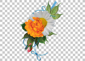 花卉剪贴画背景,花卉,橙色,雏菊家庭,插花,黄色,植物,阴影,卡通,图片