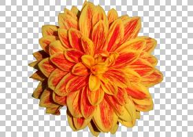 花卉剪贴画背景,英国万寿菊,向日葵,雏菊家庭,人造花,非洲菊,桃子图片