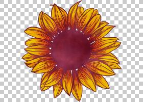 花卉剪贴画背景,草本植物,星形目,雏菊家庭,瞪羚,植物,橙色,向日图片
