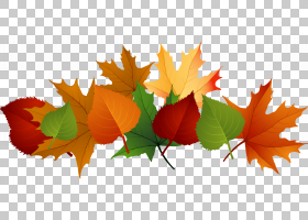 花线艺术,树,植物,枫叶,花瓣,花,橙色,图,叶,线条艺术,秋叶颜色,