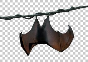 蝙蝠卡通,机翼,吊球拍,绘图,动物,兆兆字节,斯特拉卢纳,蝙蝠,