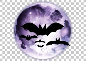 万圣节杰克・欧灯,紫罗兰,蝙蝠,紫色,埃瓦尔多・科埃略,自述文件,