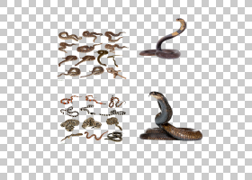 鳞片爬行动物,车身首饰,毒蛇,黄蜂,臭虫,跳蚤,银鱼,眼镜蛇,蝙蝠,