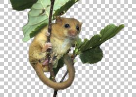 鼠标,负鼠,布鲁斯摇滚,布吉摇滚,混合使用,环境规划,环境,獾,生态