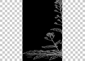 黑白花,黑白,细枝,线路,分支,花,亚灌木,树,植物群,叶,电邮,剪影,