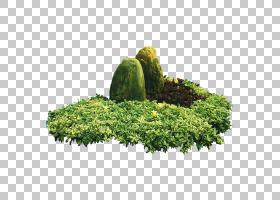 树叶,植被,草,灌木,叶,植物,常绿,像素,光栅图形,树,绿化,花园,景