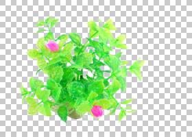 绿草背景,草,分支机构,绿色,树,花盆,叶子,植物,园林绿化,水生植