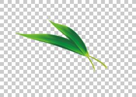 端午节,草,线路,绿色,植物,大米,饺子,龙舟,中国龙,竹子,叶子,端