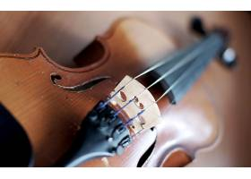 音乐,小提琴,壁纸,(5)