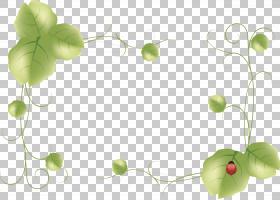 花旗,常春藤,花,种,叶,瓢虫,打印,横幅,绘图,帆布印花,海报,