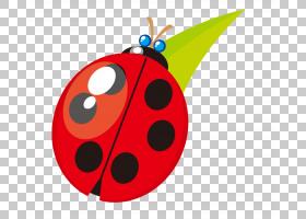 红色背景,昆虫,水果,甲虫,红色,CDR,动画片,七星瓢虫,瓢虫,