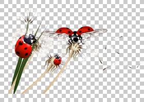 红花,红色,花瓣,鲜花,昆虫,RAR,存档文件,预览,害虫,七星瓢虫,瓢