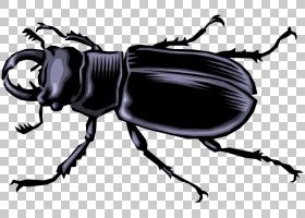 蝴蝶卡通,圣甲虫,昆虫,甲虫,动物,粉虫,Windows图元文件,动画片,