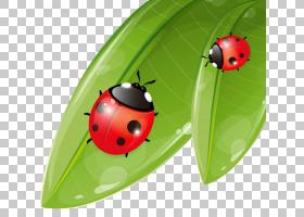 背景海报,甲虫,昆虫,叶子,植物,免费赠送,CDR,海报,动画片,瓢虫,