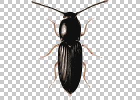 山地卡通,圣甲虫,害虫,地甲虫,粪甲虫,昆虫,Windows图元文件,山松