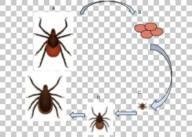 卡通狗,寄生虫,甲虫,线路,害虫,昆虫,硬蜱,硬蜱科,寄生,疾病,变速图片
