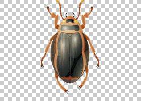 昆虫粪甲虫,鹿角,甲虫,圣甲虫,害虫,动画片,昆虫媒介,打印,绘图,