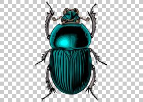 土豆卡通,圣甲虫,昆虫,科罗拉多州土豆甲虫,CDR,圣甲虫,粪甲虫,大