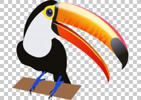 愤怒的小鸟,机翼,喙,豌豆形目,博客,老鹰,鸟儿飞行,巨嘴鸟,绘图,图片