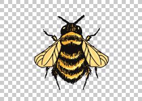 蝴蝶画,刷脚蝴蝶,飞蛾和蝴蝶,昆虫,传粉者,蜜蜂,蝴蝶,动画片,线条