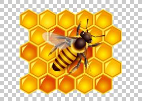 蜜蜂卡通,昆虫,传粉者,罐子,蜂箱,CDR,蜂窝结构,蜜蜂,蜂蜜,蜜蜂,