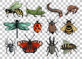 蝴蝶剪影,刷脚蝴蝶,害虫,飞蛾和蝴蝶,传粉者,蝴蝶,线条艺术,跳蚤,
