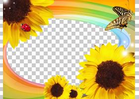 黄色背景框,黄色,雏菊家庭,花瓣,向日葵,蜜蜂,鲜花,葵花籽,SWF,软