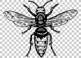 黑树,机翼,害虫,传粉者,视觉艺术,飞起来,黑白相间,昆虫,线条艺术