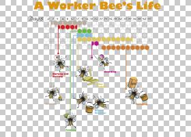 蜜蜂背景,动物形象,角度,玩具,面积,图表,线路,技术,文本,蜜蜂,蜜图片