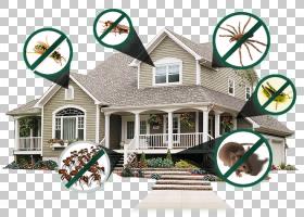 房地产背景,立面,窗口,房地产,豪斯,属性,家,膜翅目昆虫,木匠蚂蚁