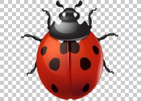 瓢虫,昆虫,水壶,甲虫,瓢虫,