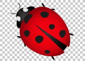 背景图案,红色,图案,设计,水果,生产,昆虫,渲染,动画,草本植物,Pl