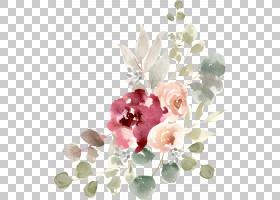免扣手绘水彩彩铅植物插画元素