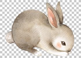 时尚创意个性手绘动物插画免扣素材图片
