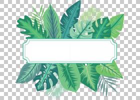 棕桐叶边框免抠PNG元素